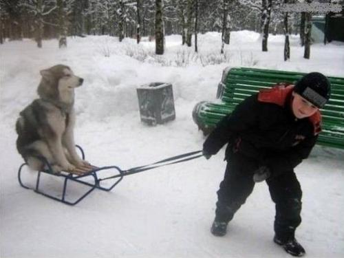 dog on sled