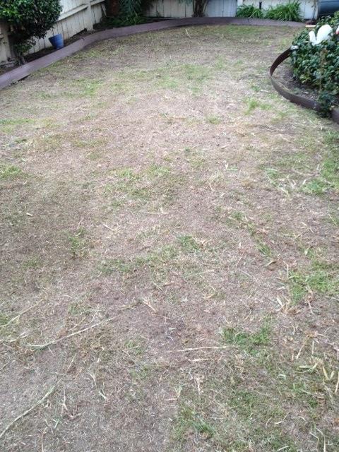 scalped lawn