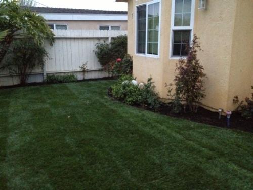 inner front yard
