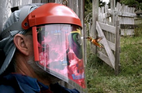 Humming Bird Helmet gets you up close