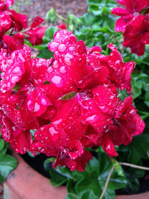 morning rain 2