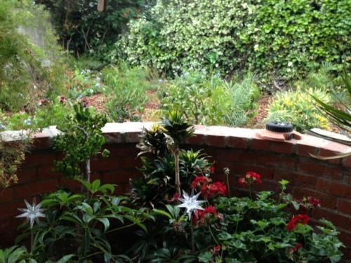 garden explodes