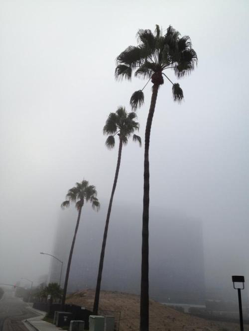 fog la jolla