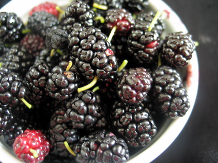 mulberries-05