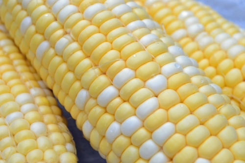 white and yellow corn