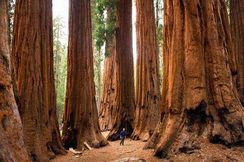 SequoiaNationalPark001
