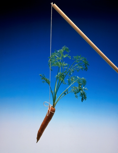 Studio shot of carrot on string as incentive reward